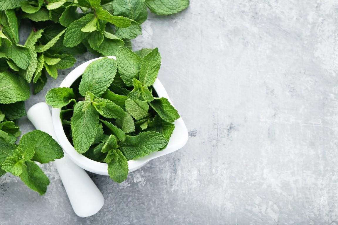 menthe plante pour maigrir